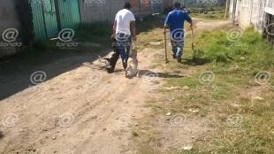 Ladrones envenenan a todos los perros de una calle para poder robar en Edomex