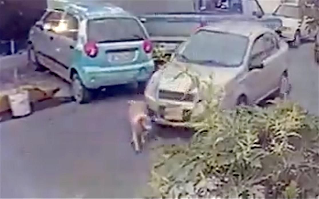 perro-video