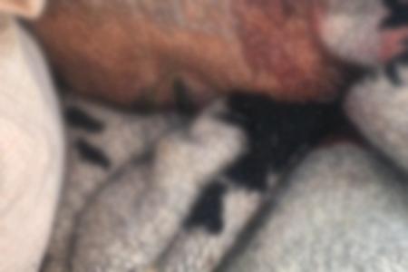 El cuerpo presentaba un impacto de bala en el cráneo